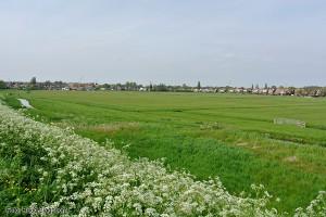 polder de dwingerd